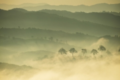 Sea of Mist at Thep Nimit Ecclesiastic's View Point, Chiang Rai Published in Chi Fa- Wiang Kaen-Chiang Khong It is all about mountain and river. Osotho Magazine, issued:January,2019 Page 31